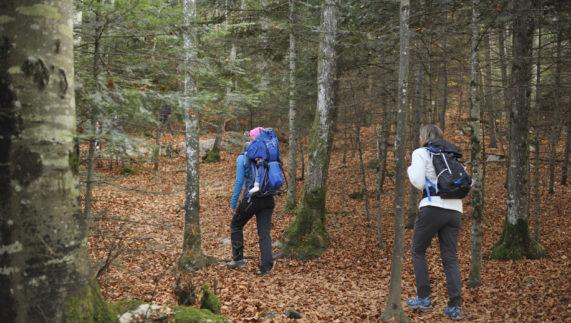 Tout savoir sur les tiques pour mieux s'en protéger en randonnée